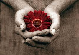 blomma-i-hand